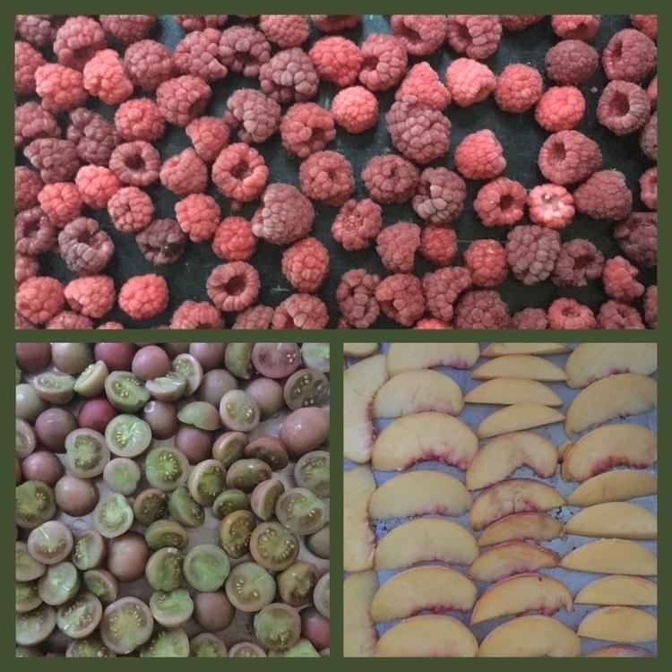 moment harvesting preserving - raspberry - laurabalducci | ello