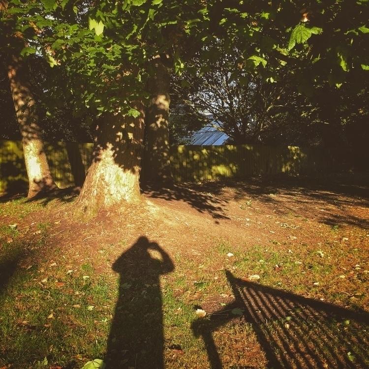 bench - autumn, fall, nature, shadow - davidhawkinsweeks | ello