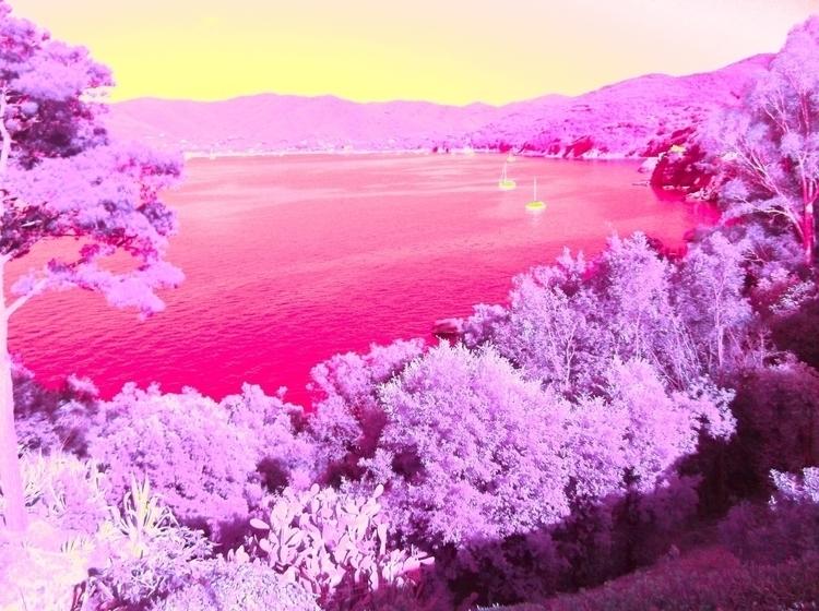 IR Foto - color invert summer 2 - santler | ello