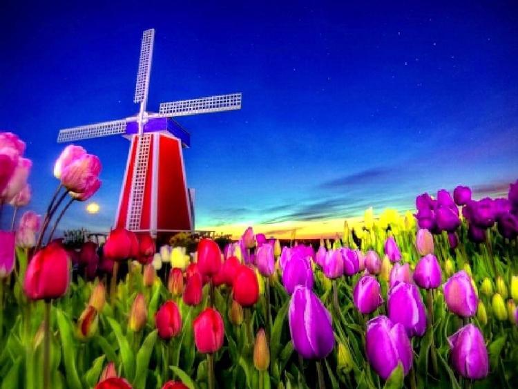 Daily Tulip – Archaeological Ne - robert-mcangus | ello