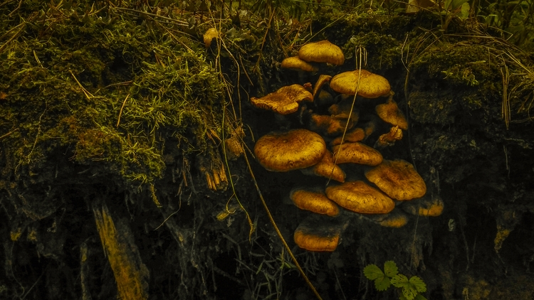 mushrooms, natureloversgallery - beheroght | ello
