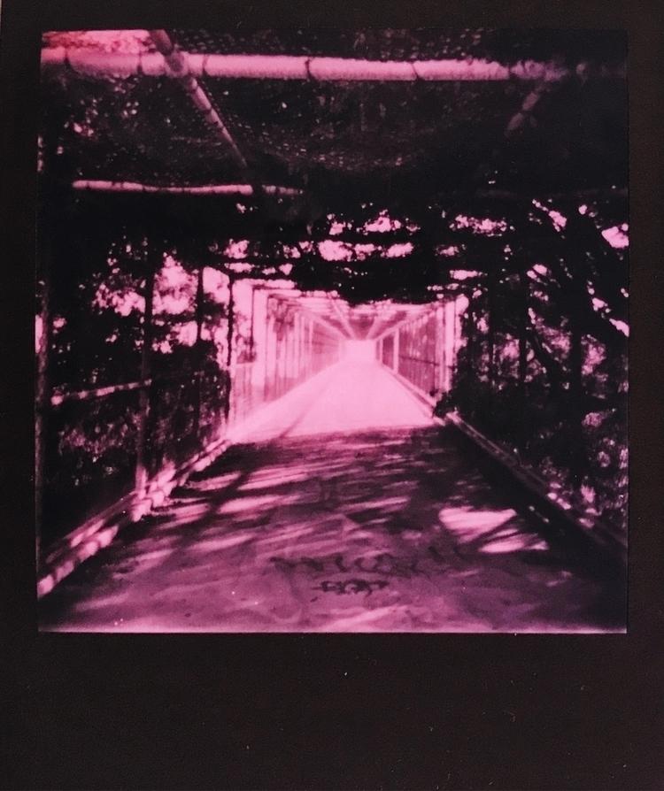 Polaroid, instantfilm, film, photography - vpixiefilm | ello