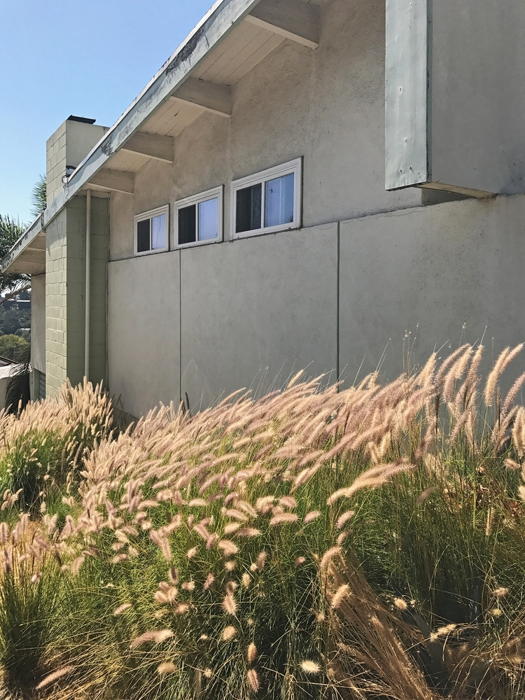 Tall Grass House, Silver Lake D - odouglas | ello