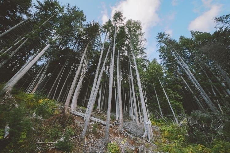 Day 135: Beneath Cedars Sept. 1 - jonathonreed | ello