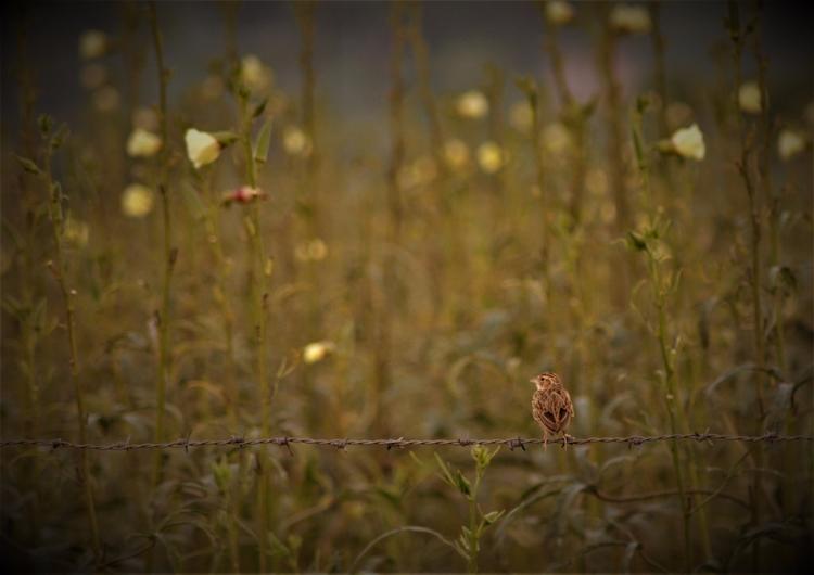 India, Sparrow - atulbw | ello