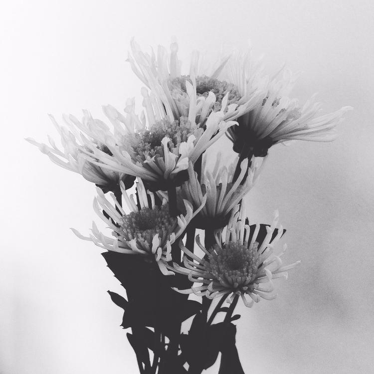 elloart, ellophotography, flowers - dressedforspace | ello