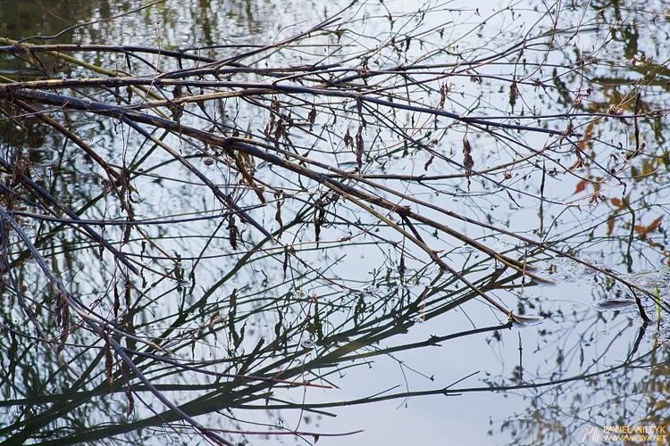 Depiction - photography, photo, nature - pawelwiesyk | ello
