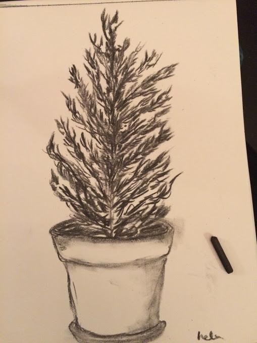 tree - charcoal - helenaugusta | ello