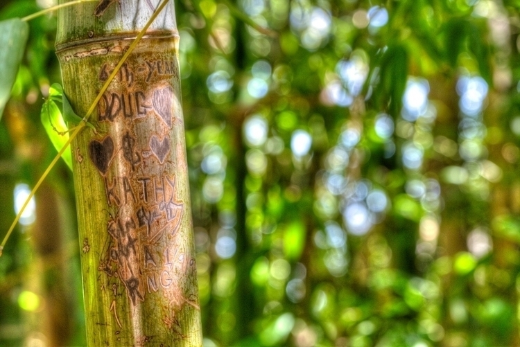 bamboo love Orcutt Ranch, West  - ellomaggie | ello