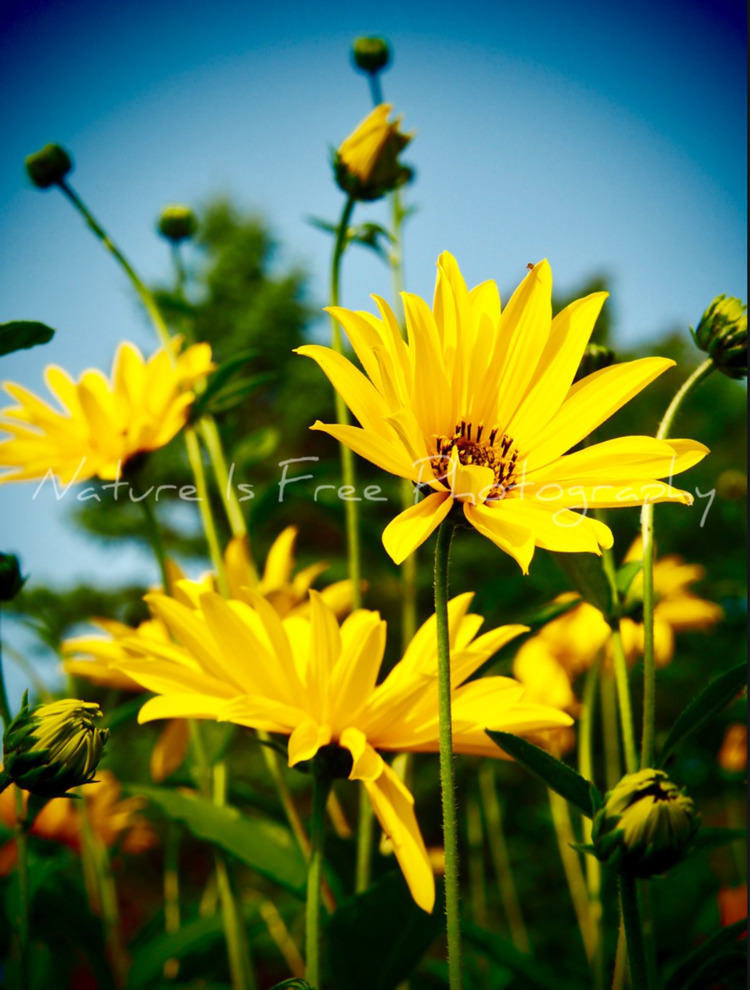 Hope Sunny Sunshine Sunday - Maine - natureisfree | ello