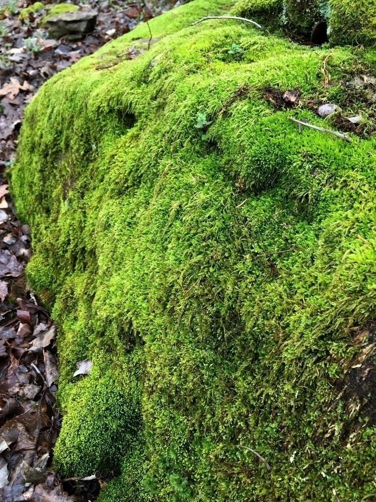 ~~stand moss~~ mossy boulder [M - moosedixon | ello