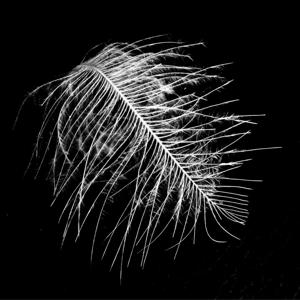 Feather study - katemoriarty | ello
