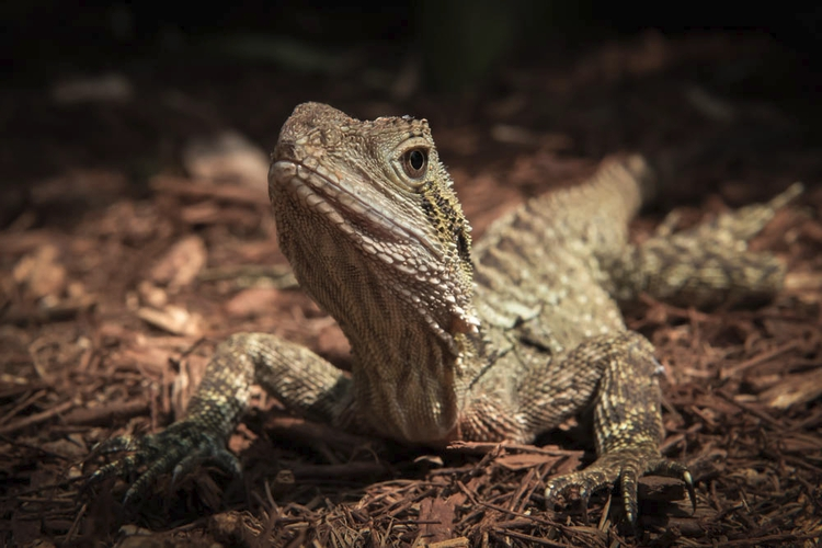 // eastern water dragon - nikon - daphot | ello