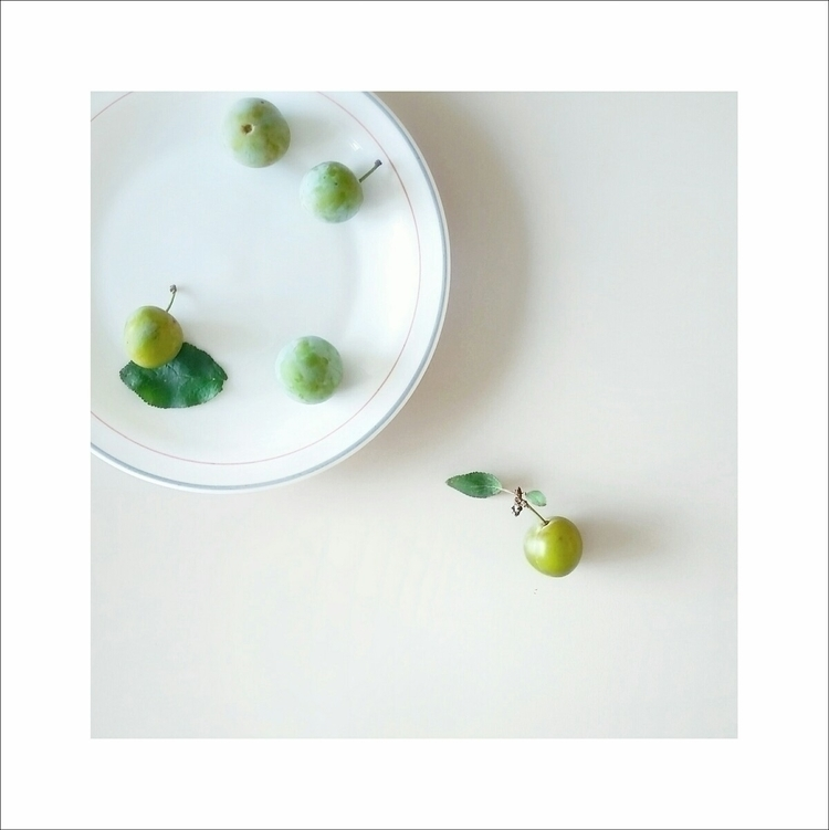 single stupid plum - photography - aleksaleksa | ello