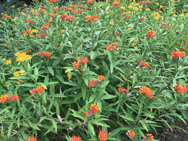 Flores enfeitam jardins de hote - antoniomg | ello