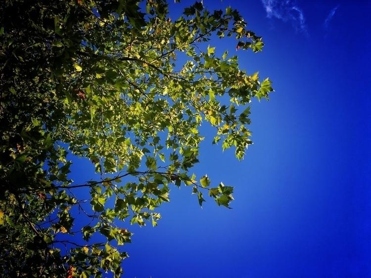 leaves turn - photography, nature - davidhawkinsweeks | ello
