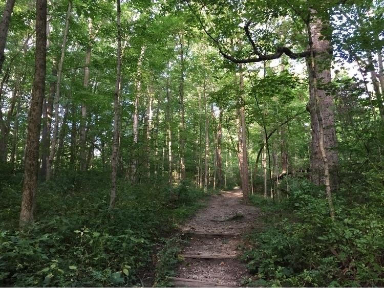 nature, photography, trail, hiking - pictorific | ello