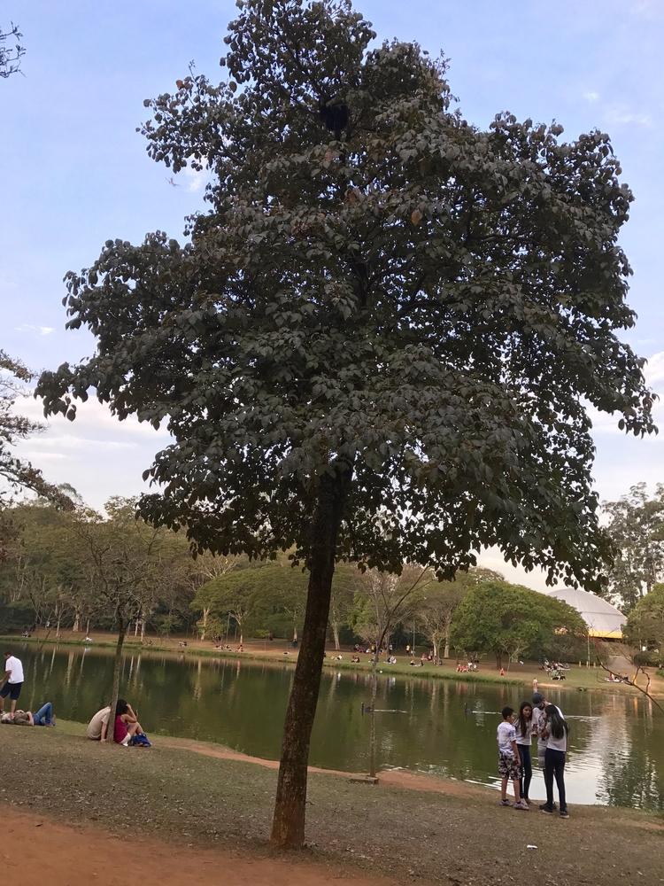 September 21, Tree Day celebrat - antoniomg | ello