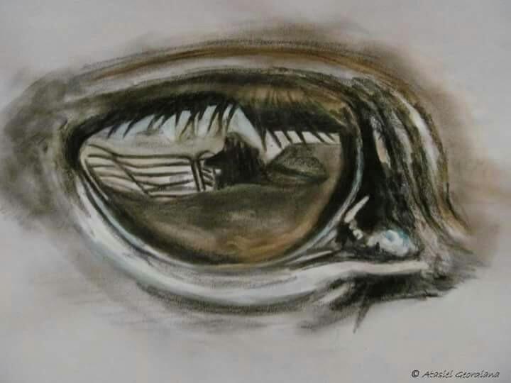 eye3, horse, paper, firststudyeye - atasieigeo | ello