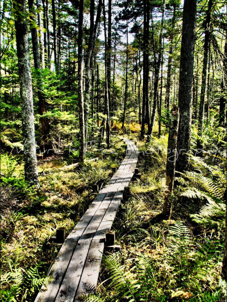 paths life, dirt. ~John Muir - Maine - natureisfree | ello