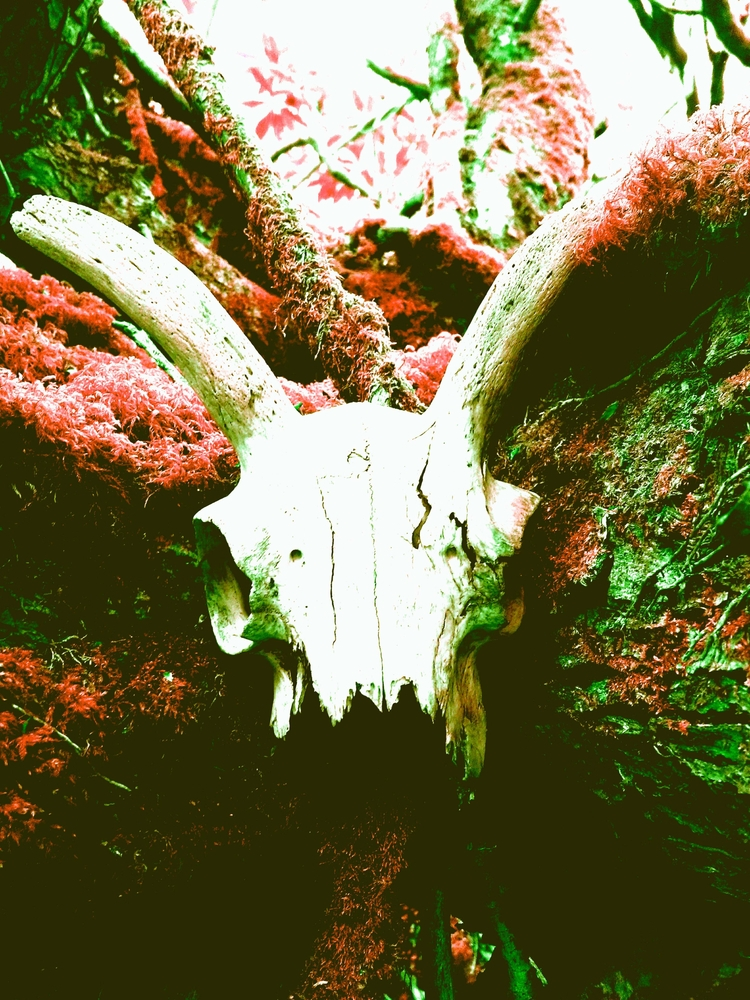 SHELLS DEAD - artphotography, artpoetry - johnhopper | ello