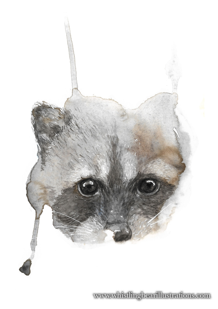Racoon - watercolour, illustration - whistlingbear | ello