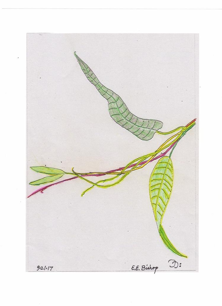 Colored pencil drawing - mokolua | ello