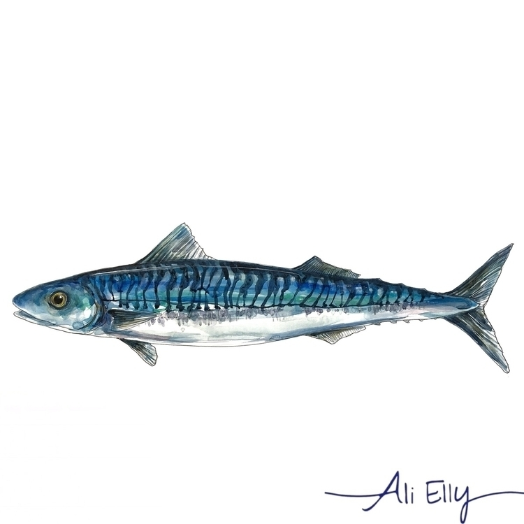 nautical, mackerel, fish, blue - aliellydesign | ello