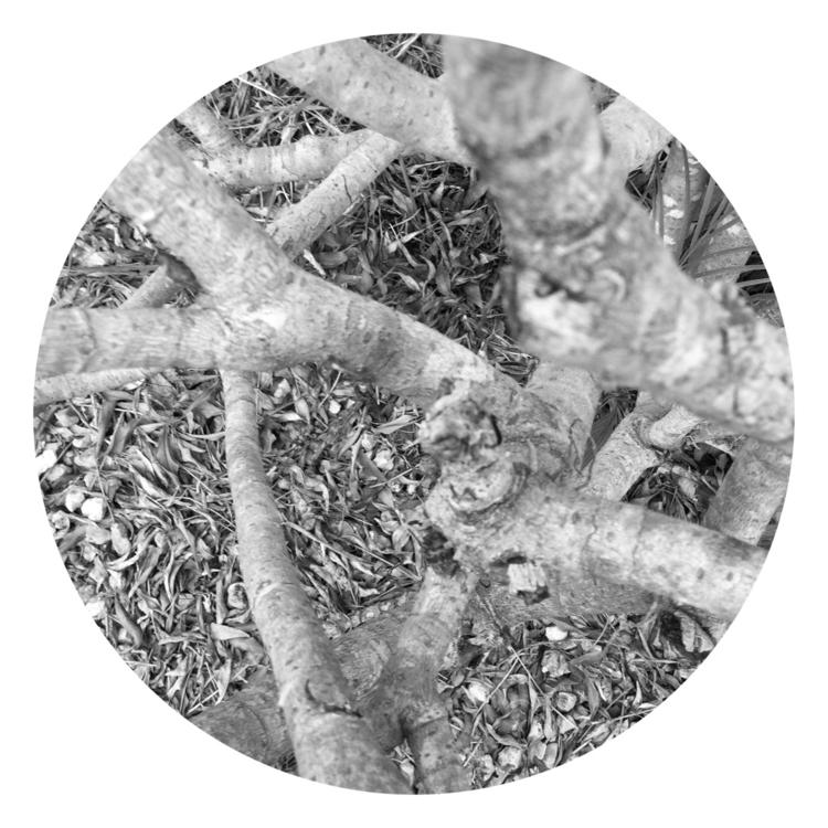 Dead Tree Trunk Apps - mikefl99 - mikefl99 | ello