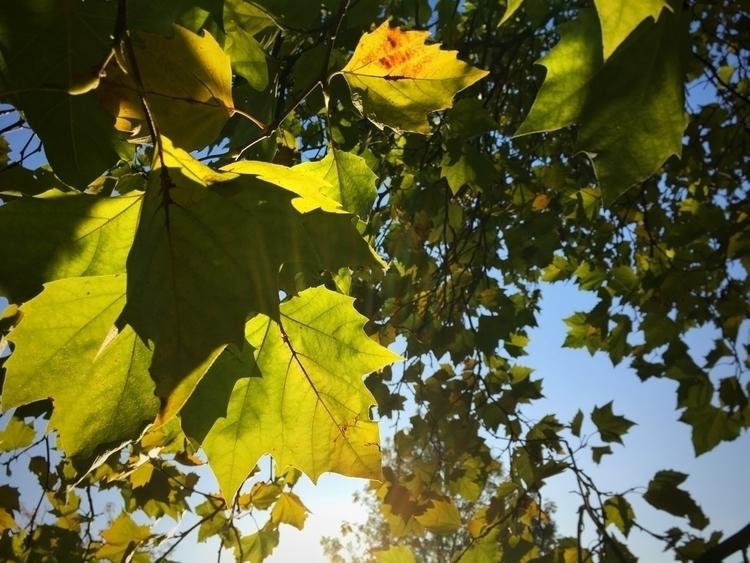 Autumnal Morning Light - leaves - davidhawkinsweeks | ello
