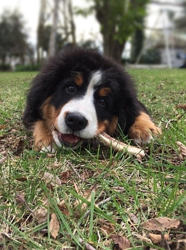 love dogs humans - photography, doglife - elisachampin   ello
