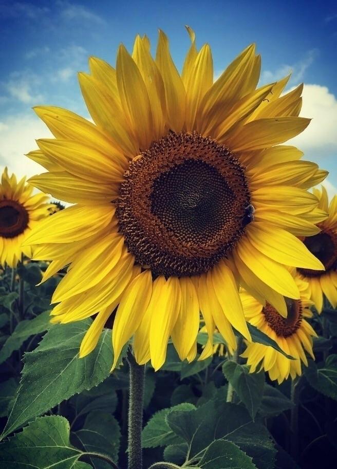 Yellow friends standing bee tic - authorcrmisty   ello