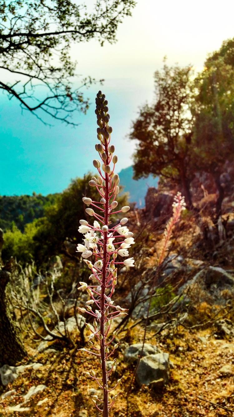 beatiful frame Lycian - flowers - yabanyolu | ello