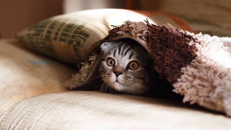 ¿Por qué los gatos arañan muebl - codigooculto | ello