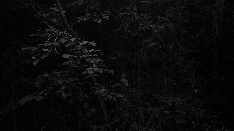 forest, trees, tree, dark, darksoul - beheroght | ello