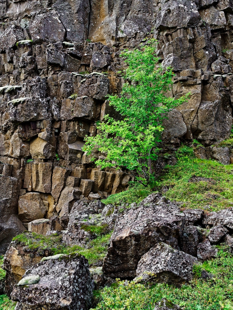 Texture studies Ring Fire. Zuik - vikingisaverb | ello