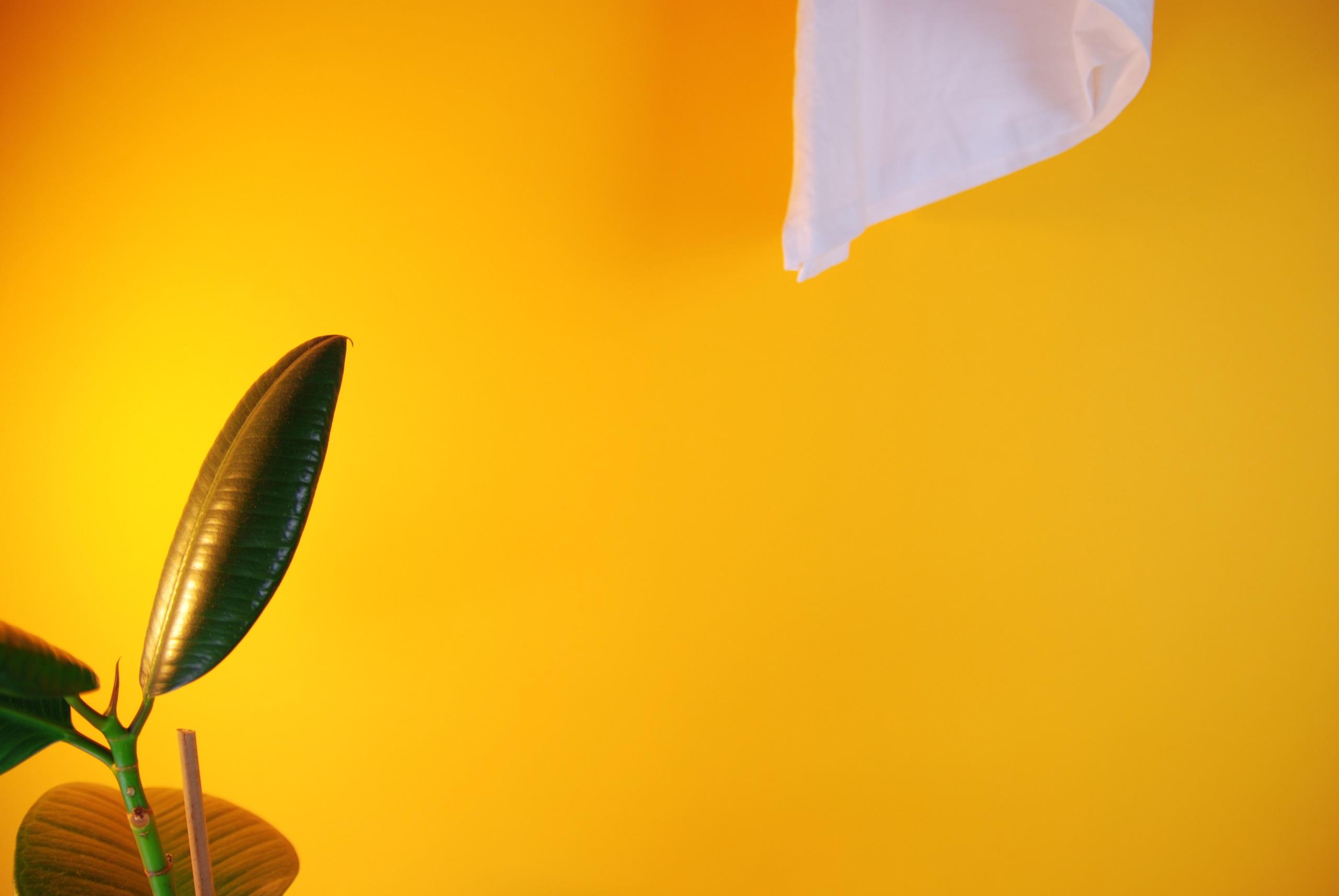 Zdjęcie przedstawia żółte tło, z lewej strony widać kawałek rośliny, a w prawym górnym rogu kawałek białej tkaniny.