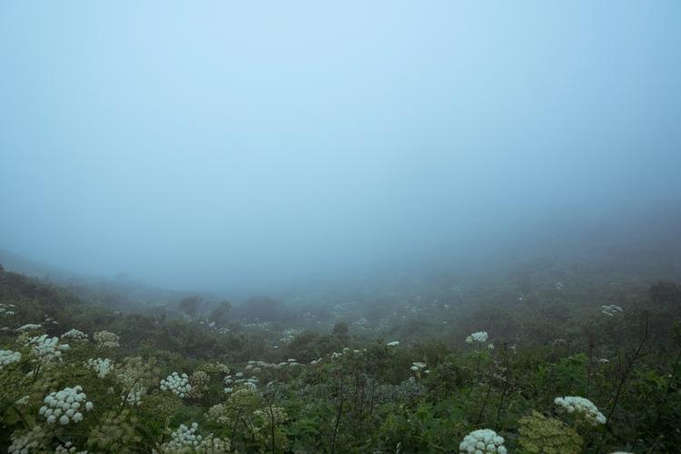 Fog - witchoria | ello