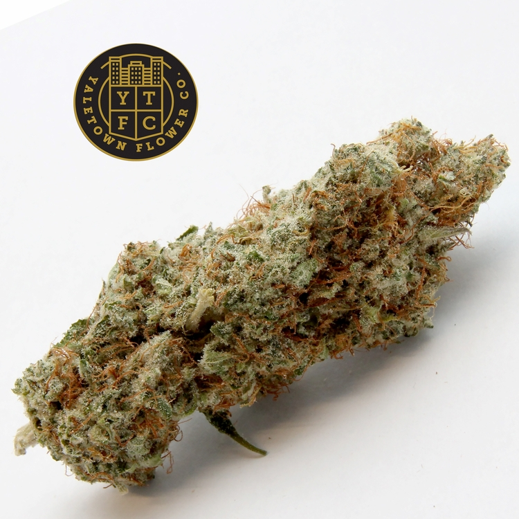 Chocolope Yaletown Flower Co. b - greenz | ello