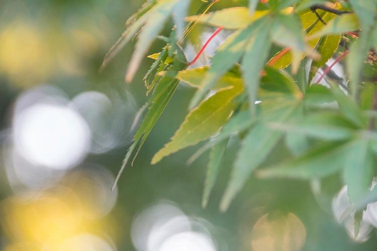 Autumn Part - tomsimonsen | ello