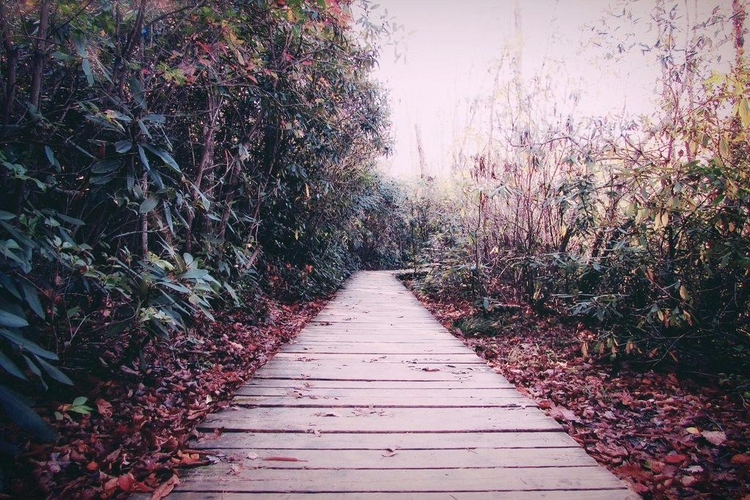 Walkway Autumn - jasonlowder-project | ello