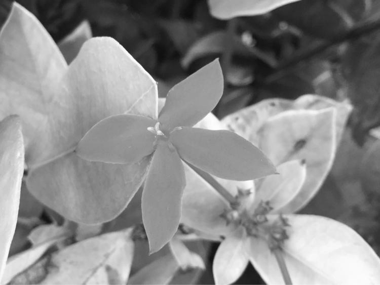 Flower Reaching Sunlight Apps - mikefl99 - mikefl99 | ello
