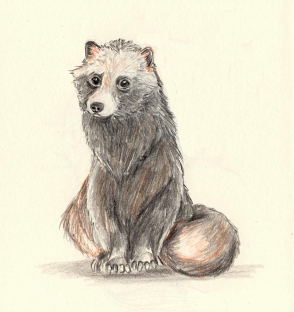 contented tanuki - doodle, drawing - j0eyg1rl | ello