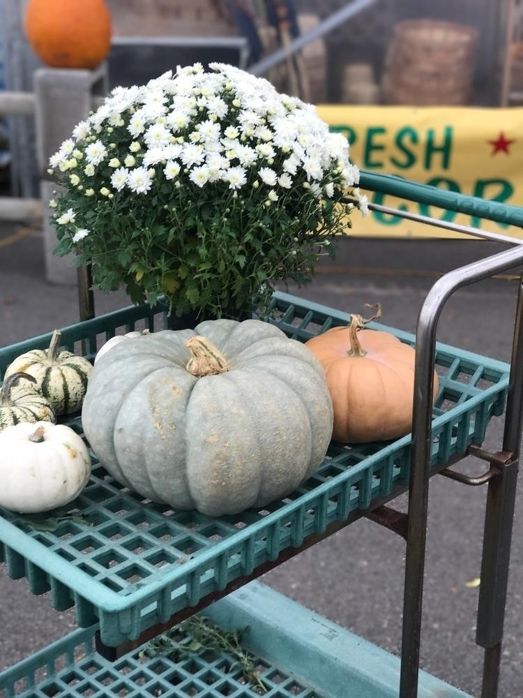 fall mums Cinderella pumpkins?  - casskelle | ello