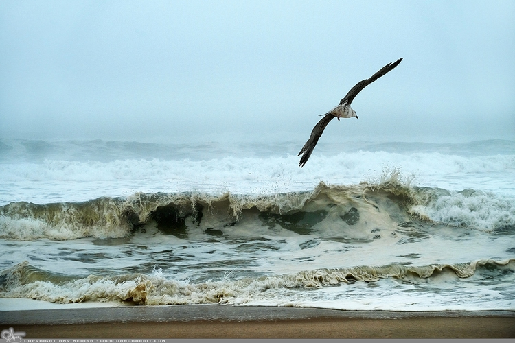 Ocean Flight favorites ocean gu - dangrabbit-photography | ello