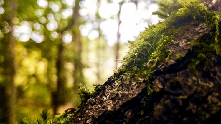 nature, natureloversgallery, nature:leaves: - beheroght | ello