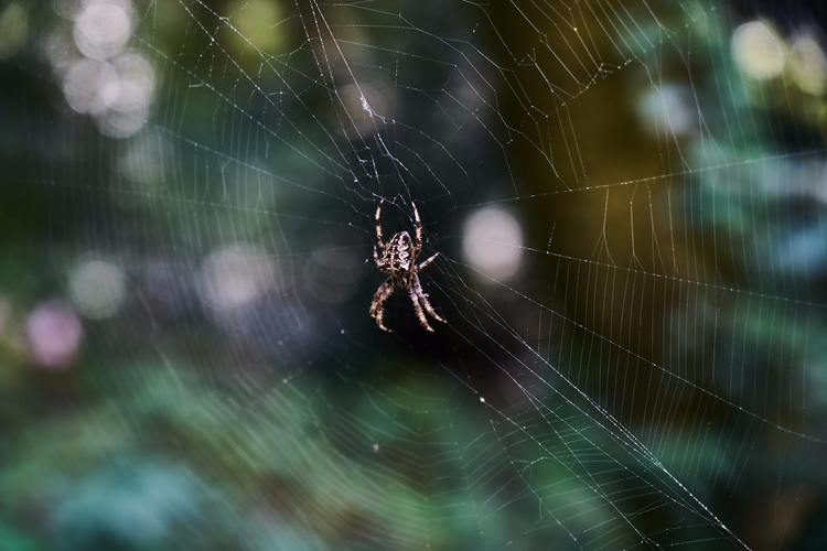 Wincy - spider, web, nature, photography - urbansquid | ello