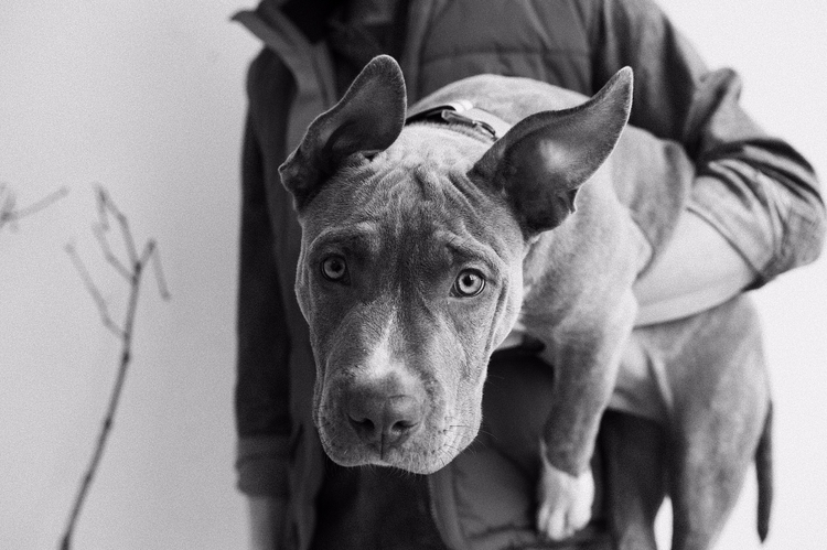 Reduced Design Canine Magazine - reduceddesign | ello