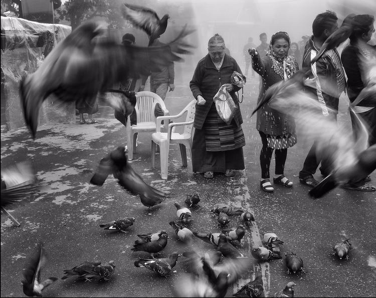 pigeon feeder - nikonomania | ello