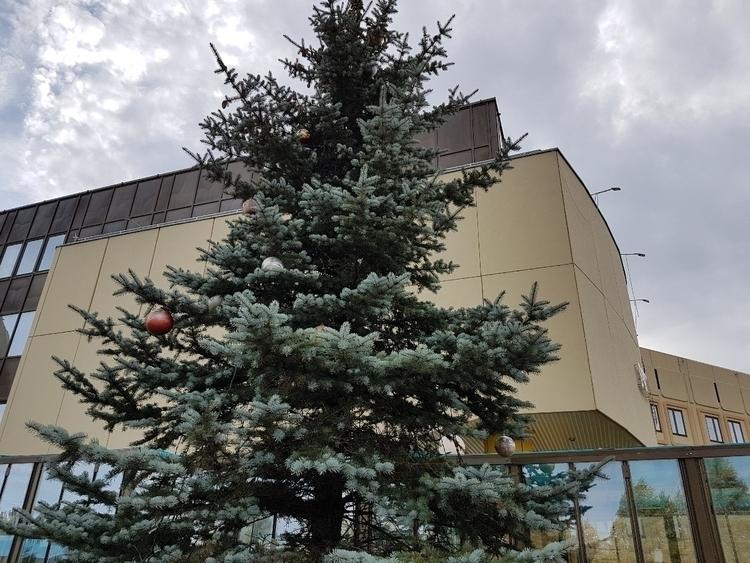 Christmas tree Leninsk-Kuznetsk - egor_creator | ello